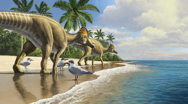 Duckbill dinosaurs evolved in north America, spreading to South America, Asia, Europe, and finally Africa CREDIT: Credit: Raul Martin