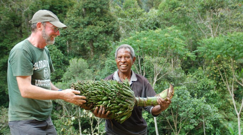 Scientists Bart Panis and a local guide hold their rare find of Musa ingens, a wild species that grows up to 15 meters in height. CREDIT: S.Carpentier