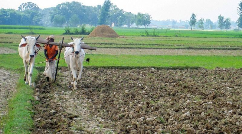 farmer farming agriculture nepal