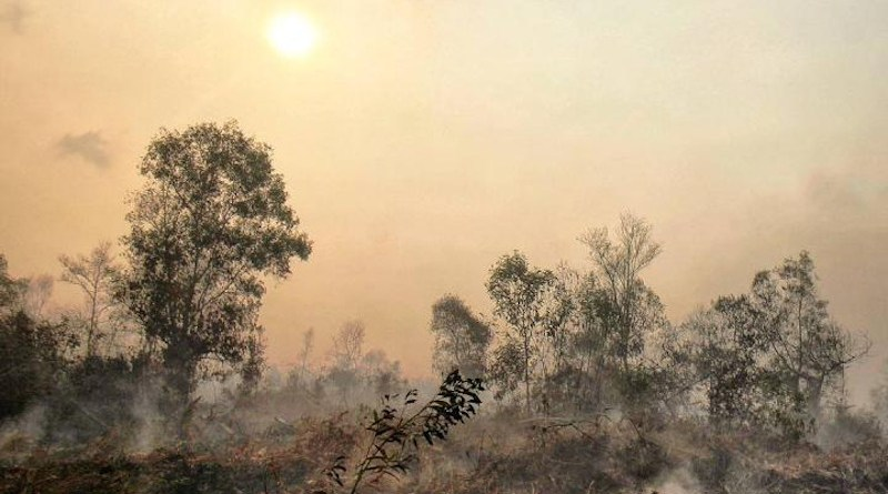 A new study led by Swansea University reveals that only 10% of the forest that is left on two Indonesian islands remains fire-resistant. The researchers warn that protecting this is crucial for preventing catastrophic fire. Tropical deforestation exacerbates recurrent peatland fire events in this region. These release globally significant greenhouse gas emissions and produce toxic haze events across South East Asia. CREDIT T. Smith