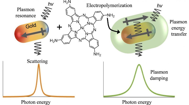 Rice University scientists coupled gold nanoparticles with soft polymers that pull energy from the gold's plasmonic response to light. That energy can then be used to potentially catalyze chemical reactions. CREDIT Emily Searles/Rice University