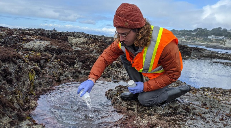 Stanford researcher Ryan Searcy collects water samples from a tide pool at the Fitzgerald Marine Reserve, in Moss Beach, California. CREDIT Meghan Shea