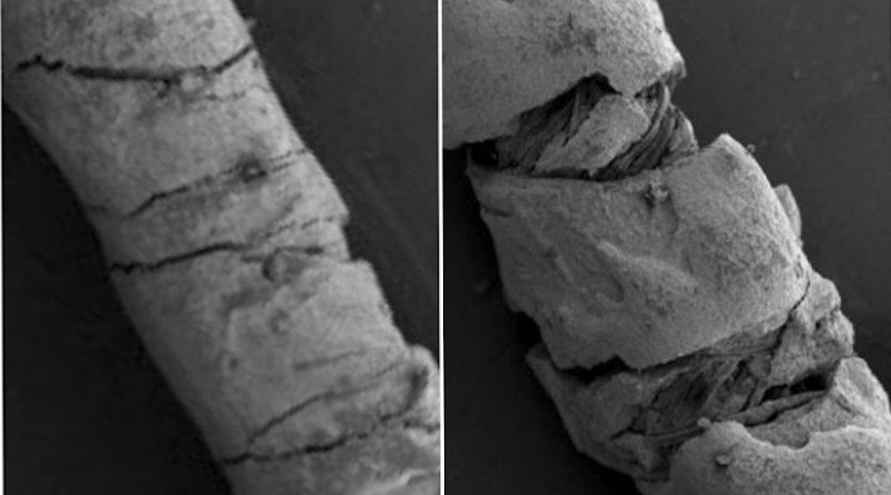 Scanning electron microscopy of carbon ink-coated threads. Straight thread on left. Bending the coated threads creates strain (right), which changes their electrical conductivity - a quantity that can used to calculate the degree of deformation (scale bar 200 microns) CREDIT Yiwen Jiang, Tufts University