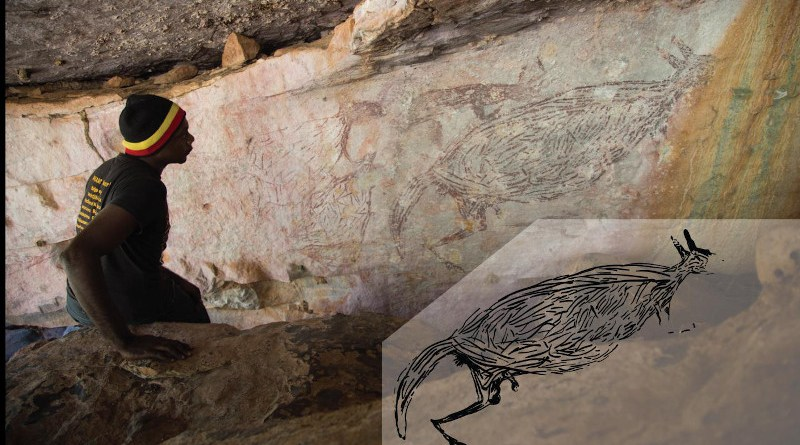 Traditional Owner Ian Waina inspecting a Naturalistic painting of a kangaroo, determined to be more than 12,700 years old based on the age of overlying mud wasp nests. The inset is an illustration of the painting above it. CREDIT Photo: Peter Veth and the Balanggarra Aboriginal Corporation, Illustration: Pauline Heaney
