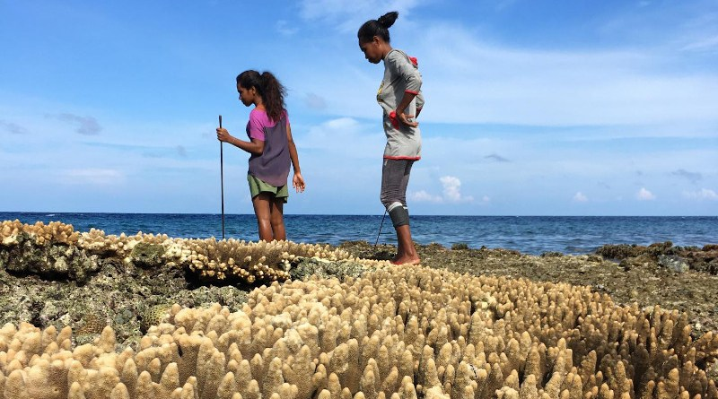 Women 'gleaning'--collecting molluscs, crabs, octopus and reef fish by hand close to shore--on Atauro Island. CREDIT Ruby Grantham / ARC Centre of Excellence for Coral Reef Studies.