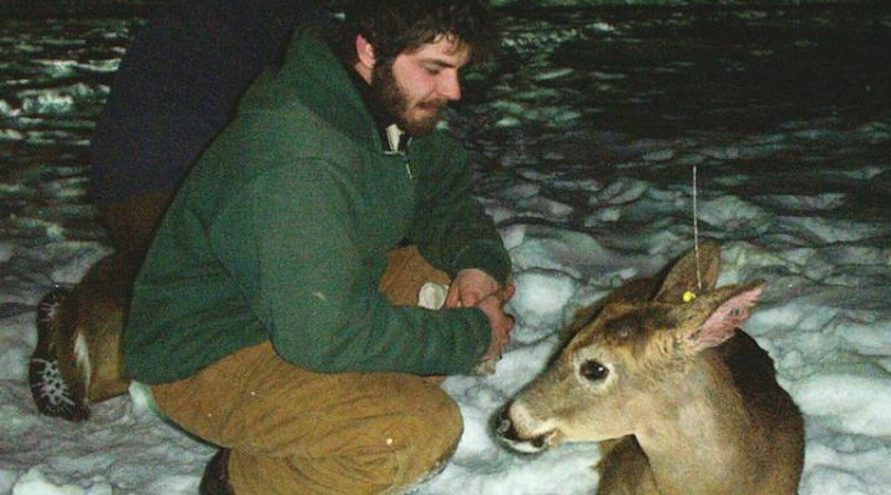 Field technicians Greg Huchko (front) and Jason Kougher (back) are shown with a young buck waking up after being captured in a drop net, sedated and processed. The device on the deer is a VHF ear-tag transmitter. CREDIT Diefenbach Lab, Penn State
