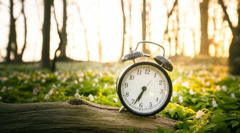 Plants can't stumble to the fridge in the middle of the night if they get hungry so they have to predict the length of the night so there's enough energy to last until sunrise; a bit like setting an alarm clock. CREDIT Getty