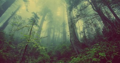 Forest Mist Nature Trees Mystic Atmospheric Fog