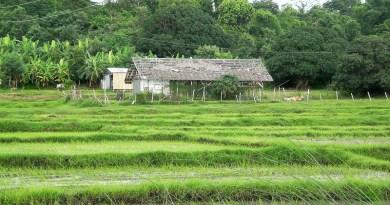 Abandoned farm Philippines