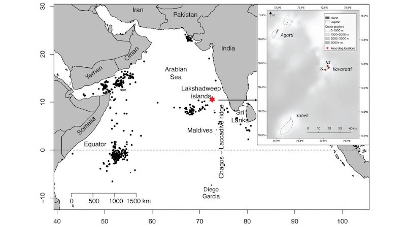 The red star shows where divers placed two underwater microphones, from late 2018 to fall 2019 and from fall 2019 to early 2020, at depths of 11 meters (36 feet) and 29 meters (95 feet), off the southwest Indian coast. The box at the right is a magnified view of the study region. Black dots show where illegal Soviet whaling ships hunted blue whales in the past. CREDIT Panicker and Stafford/Marine Mammal Science