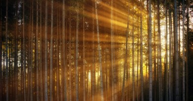 Sunrise Forest Sunlight Sunbeam Rays Light Morning Haze