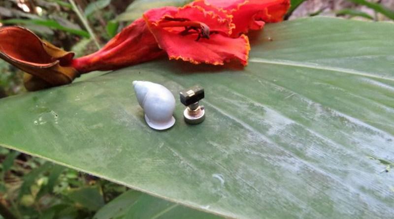 A Partula hyalina snail resting on a wild red ginger leaf next to a Michigan Micro Mote computer system in a forest edge habitat in Tahiti. Credit: Inhee Lee