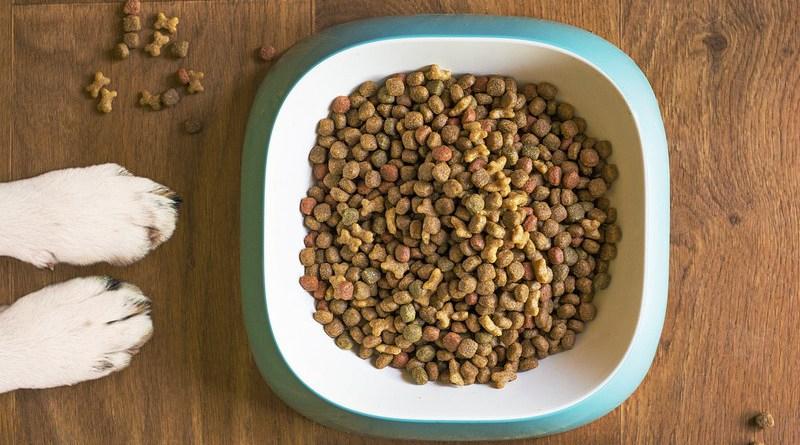 Dog Food Dog Bowl Dog Kibble Dry Dog Food Paws