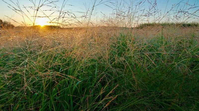 Taking soil cores in a prairie plot CREDIT K.Stepnitz, Michigan State University