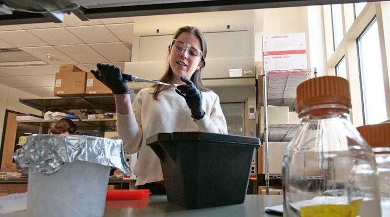 Irene Francino Urdaniz works on her spike protein research. CREDIT: University of Colorado Boulder