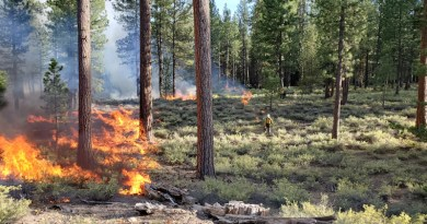 Prescribed burns are an important part of wildfire management. CREDIT: Photo by Jason Pettigrew. Oregon Department of Forestry.