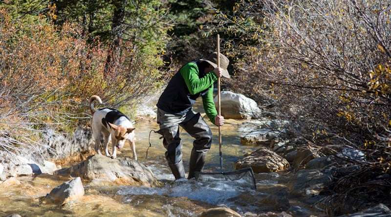 """Nate Rock, accompanied by his dog Nita, collects aquatic insects from the Snake River during a 2015 field trip for a CU Boulder course on stream ecology taught by Diane McKnight. These samples are considered a """"bioassessment,"""" which use insect diversity and abundance to characterize habitat quality, pollution tolerance, and are also later analyzed by a lab to measure metals present in their biomass. CREDIT: Stephen Cardinale"""