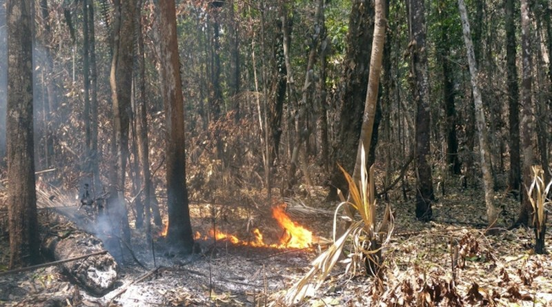 Carbon stocks fall 12.8% in burned areas on average CREDIT: Inpe