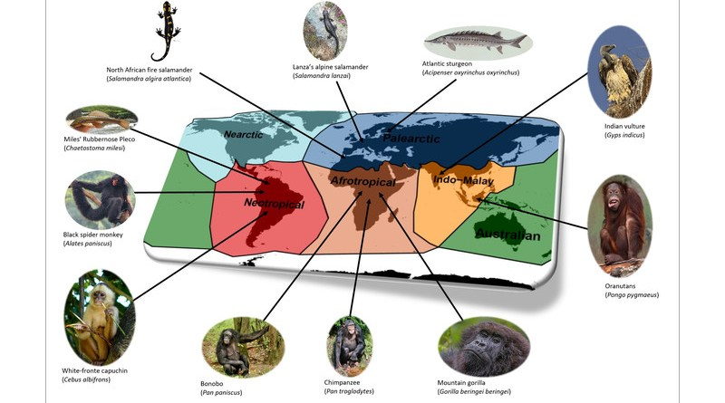 Toussaint et al 2021 - Examples of threatened species supporting unique functional traits. CREDIT: Wikimedia Commons