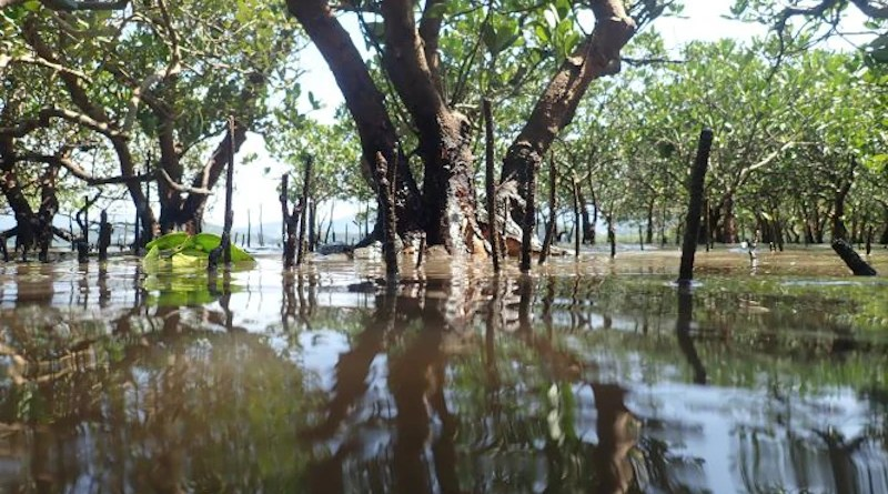 Mangrove forests worldwide host invertebrate assemblages with low functional diversity. (Photo credit: Stefano Cannicci)