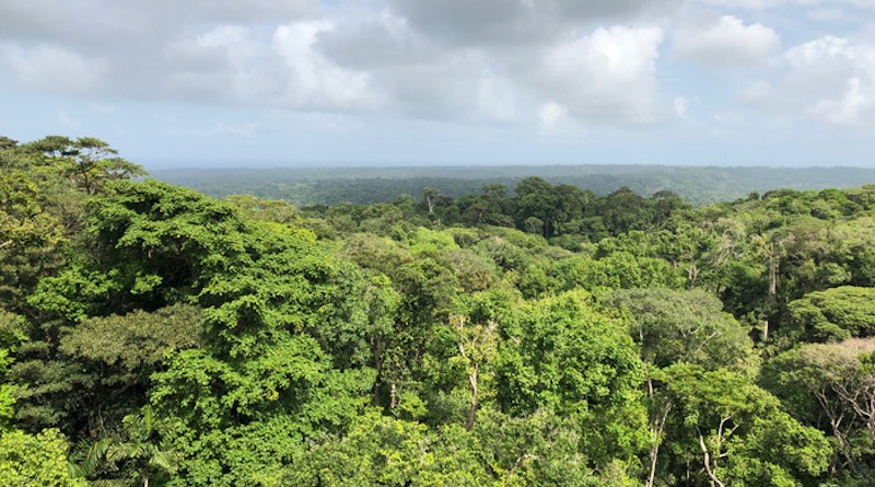 Panama's forest canopy (Colón, Panama). CREDIT: Camilo Alejo
