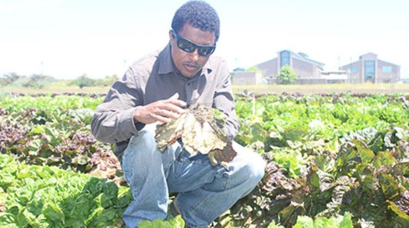 Bullo Erena Mamo with lettuce CREDIT: Bullo Erena Mamo