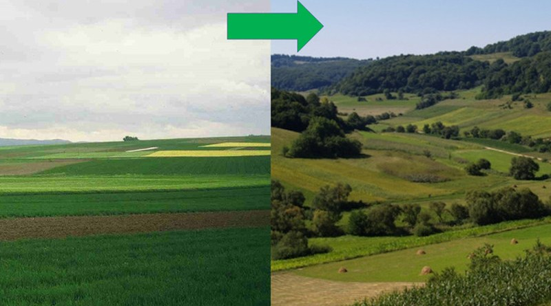 The restoration of agricultural landscapes for ecosystem services such as pollination and biological pest control needs targeted management to increase structural complexity and heterogeneity. Small fields, diverse crops and at least one-fifth semi-natural areas would be in line with the UN Decade (2021-2030) on ecosystem restoration. CREDIT: Dr Tibor Härtel (right), Professor Teja Tscharntke (left)
