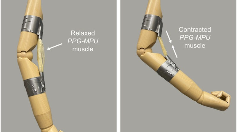 An artificial muscle made of a stretched shape memory polymer contracts upon heating, bending a mannequin's arm. CREDIT: Adapted from ACS Central Science 2021, DOI: 10.1021/acscentsci.1c00829