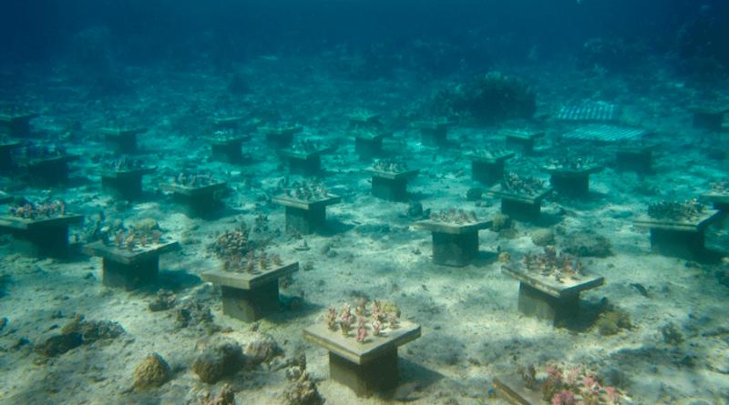 Coral Gardens in French Polynesia CREDIT: Georgia Tech
