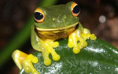 Je dois faire un exposé sur la respiration de la grenouille ; de quoi puis-je parler, comment, quel document ?