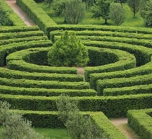 photo d'un labyrinthe de verdure