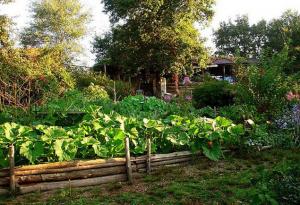 Je voudrais connaître les bases de la permaculture pour un tout petit jardin…