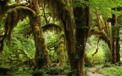 Je cherche des références sur la forêt tropicale…
