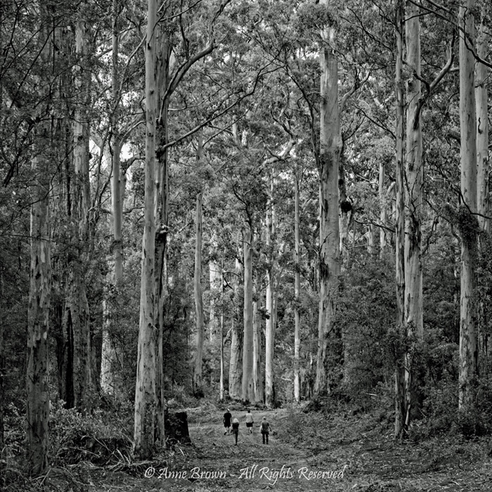 A Walk in the Forest by Anne Brown