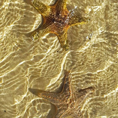 Stars in the sand by Jeanette Robben