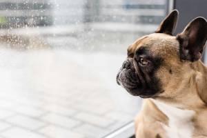 viajar com cachorros braquicefalicos