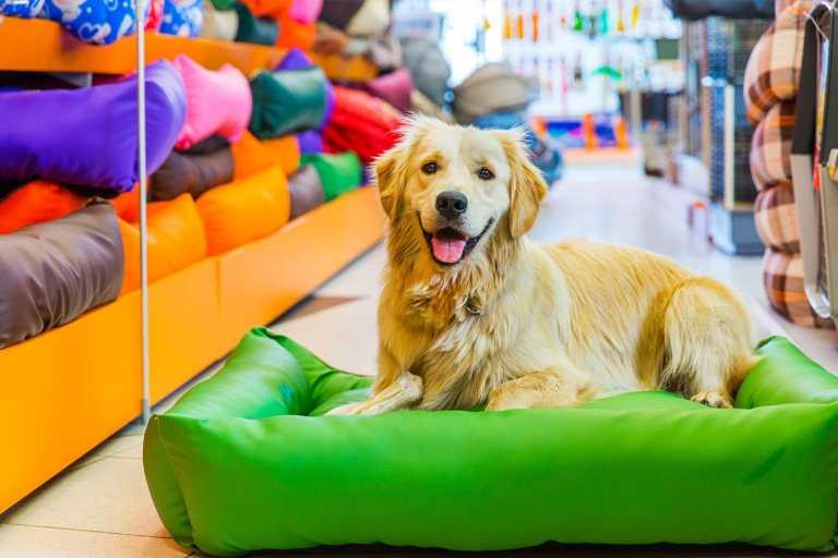 Pet Shop em Portugal: conheça as principais e dicas úteis para seu pet