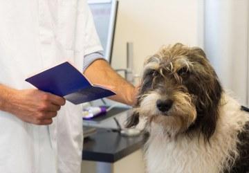Passaporte para cachorro