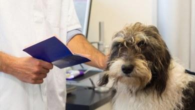 Photo of Passaporte para cachorro: como fazer e principais exigências