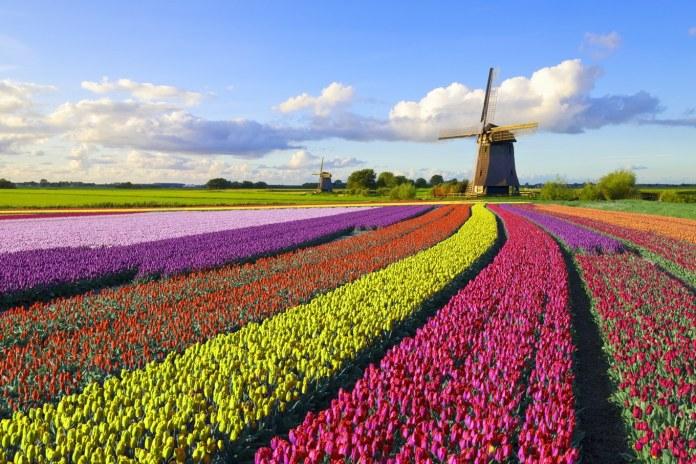 Tudo sobre a Holanda: conheça tudo sobre o país das tulipas
