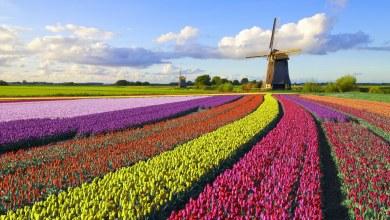 Photo of Tudo sobre a Holanda: conheça tudo sobre o país das tulipas