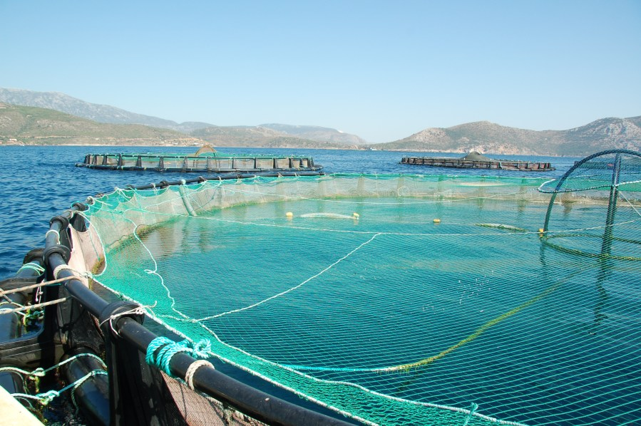 Piecing together a mosaic   Eurofish Magazine The strategy for the development of aquaculture in the Mediterranean and  Black Sea region aims at economic  environmental  and social sustainability