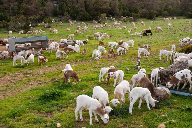 ¿Qué ganadería para qué mundo rural?