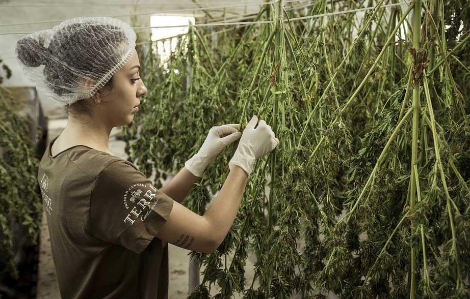 cannabis Europa madrid
