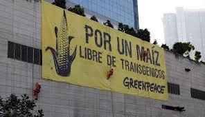 Protesta contra los transgénicos en México