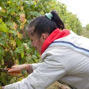 Élvonalban a Soproni Chardonnay