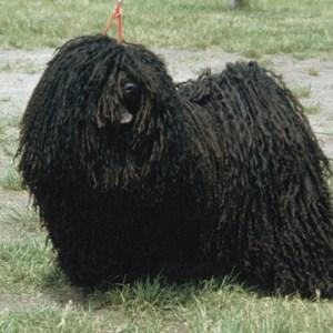 Kóci, az első kutyám