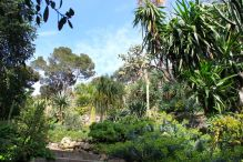 Cacti in the Exotic Garden ofVilla Ephrussi de Rothschild