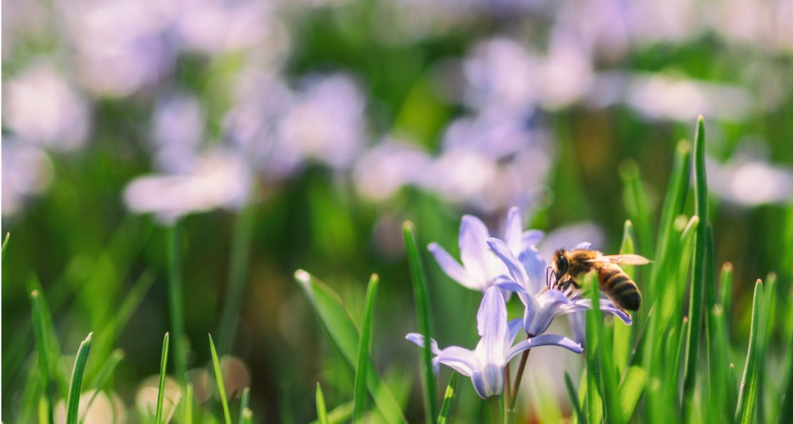'Bee-friendly' pesticides may be equally harmful to bees