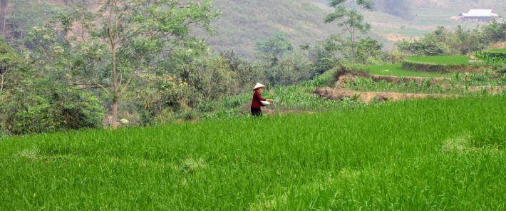 Adopting climate-smart agricultural practices can have a positive economic impact